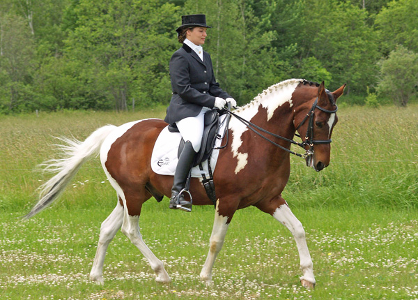 sponsored rider Most expensive luxury breed   American Paint horse